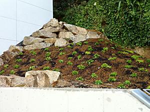 muro-de-piedra-muroxs